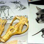 Portfolio: A new book about the Tasmanian Tiger