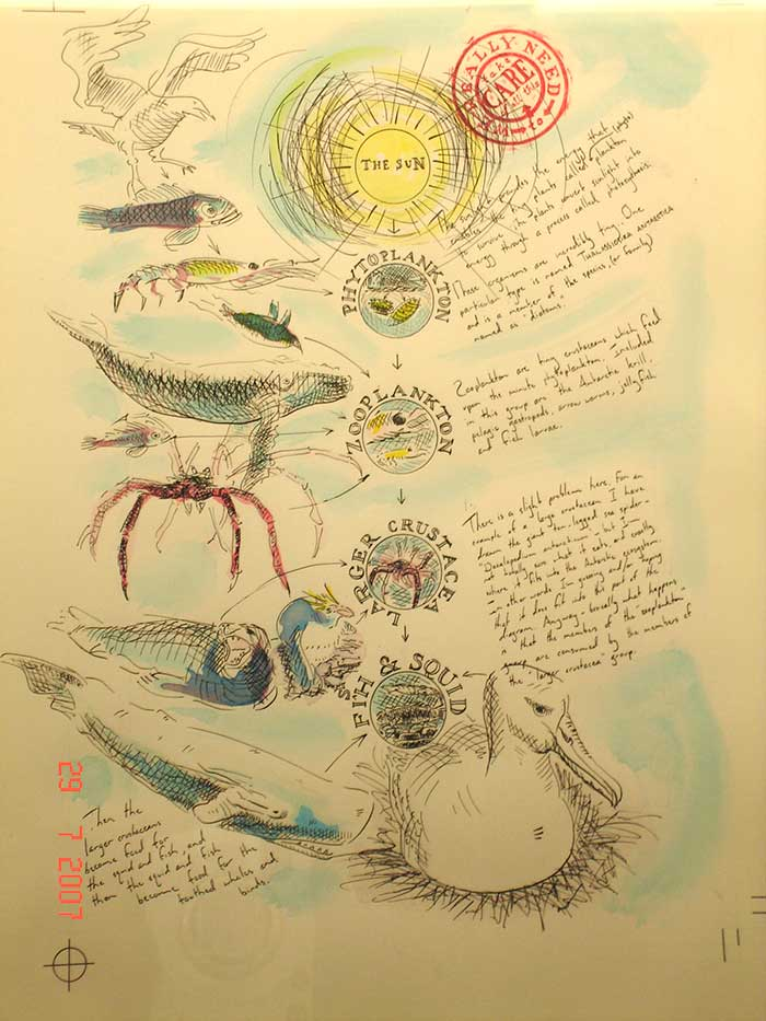Tim Squires Antarctic food chain, pen, ink and wash on paper.