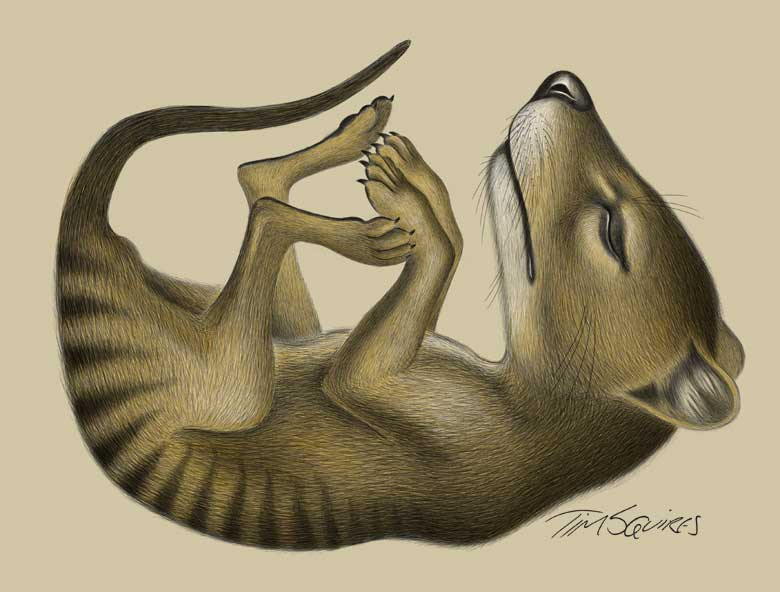 Thylacine pup completed digital drawing by Tim Squires.