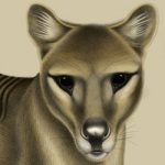 New thylacine artwork for Threatened Species Day