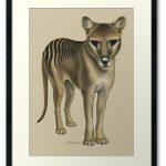 Tasmanian Tiger (Thylacine) fine art print