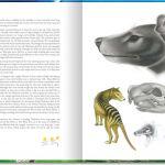 Animals of Tasmania. Thylacine. Pencil, ink and wash.