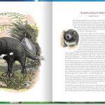 Animals of Tasmania. Tasmanian devil. Ink and wash.