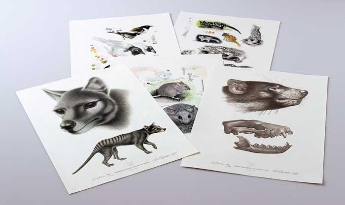 Animals of Tasmania limited edition prints.