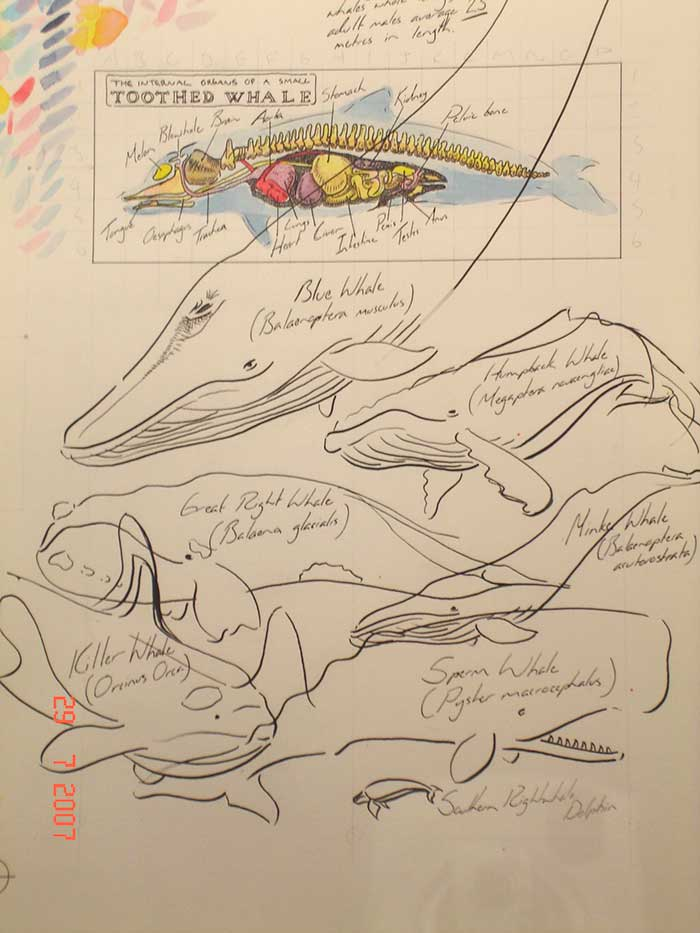 Tim Squires whales of the southern ocean, pen, ink and wash on paper.